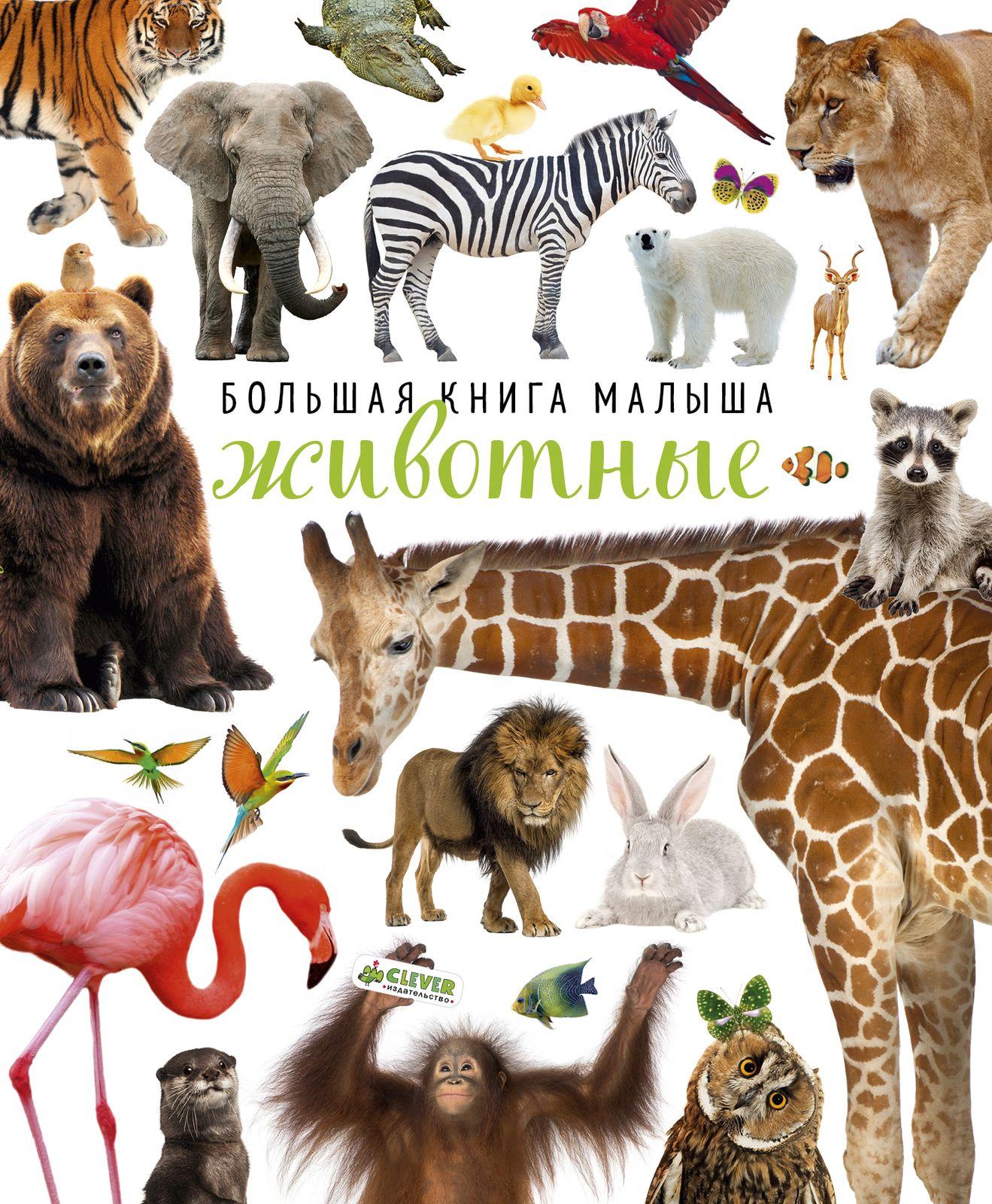 Купить Большая книга малыша. Животные, Издательство Клевер